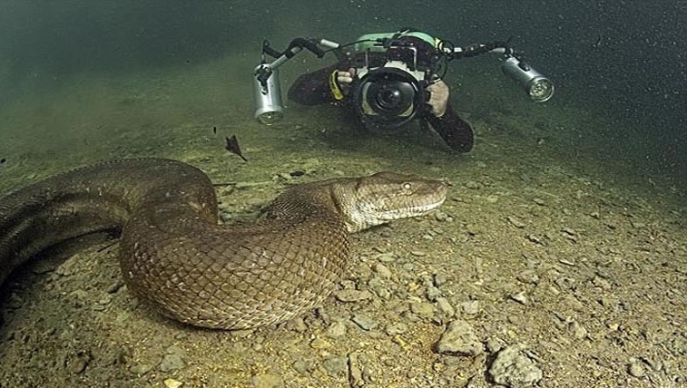 Anaconda 03.jpg