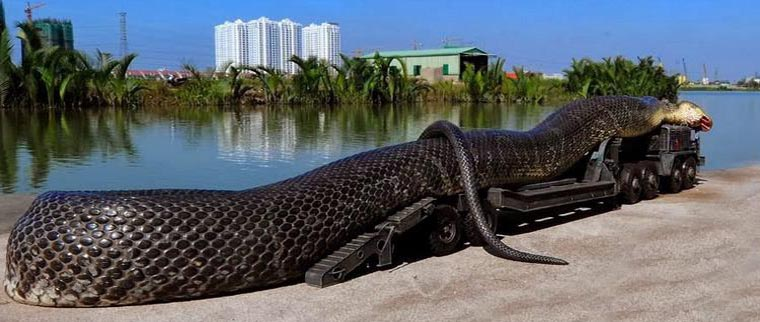 Anaconda 05.jpg