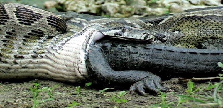 Anaconda 04.jpg