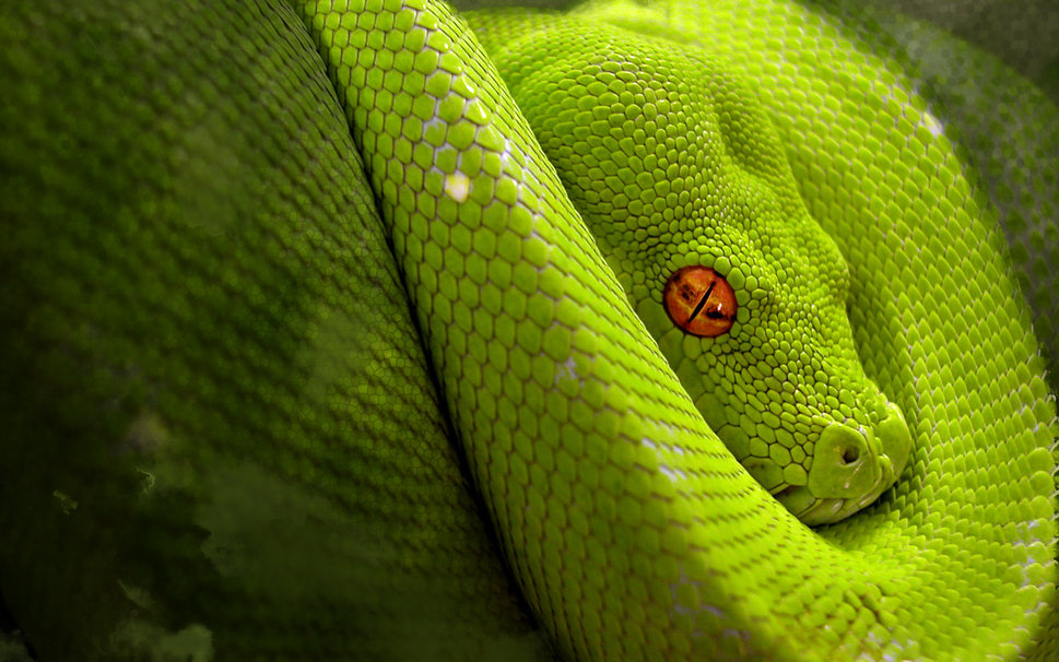 Anaconda 02.jpg